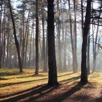 Лучей весенних невесомость... :: Лесо-Вед (Баранов)