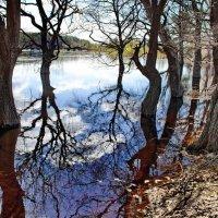 Спадает вешняя вода... :: Лесо-Вед (Баранов)