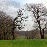 Деревья, холмы, дороги :: Nina Yudicheva