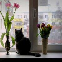 Вечернее в Марта... :: Вера Шамраева