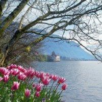 весна, весна.., как воздух чист :: Elena Wymann