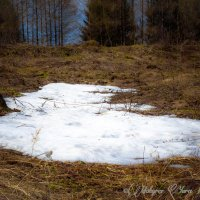 последний снег :: юрий мотырев