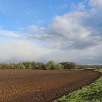 Весеннее поле. :: Ирина Королева