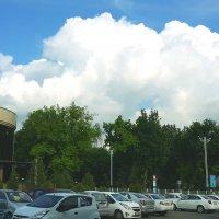 После дождя :: Светлана