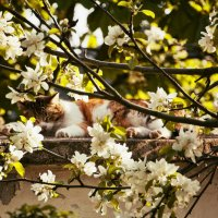 Весна :: Ольга Мальцева