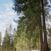 Модель и лес :: Валерий Талашов
