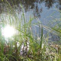 Солнечные блики на воде :: Ирина