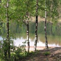 Березы на берегу озера :: Ирина