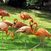 Розовые фламинго :: Герович Лилия