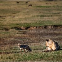 Утро в саванне...Танзания! :: Александр Вивчарик