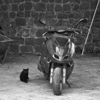 Я и мой мотоцикл :: Виталий К