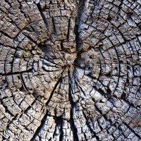 Земли Вселенский календарь... :: Лесо-Вед (Баранов)
