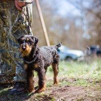 выставка собак 2016 :: Svetlana SSD Zhelezkina