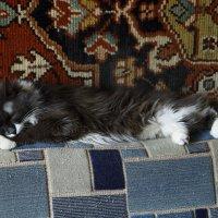 Отдыхающий кот :: Николай Холопов