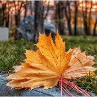 Прошедшая осень :: Олег Стасенко