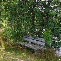 Скамейка в кустах :: Vladimir