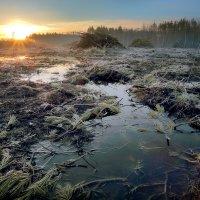 Рассвет поверженного леса.. :: Андрей Войцехов