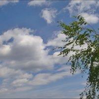 """Берёзка словно шептала: """"Доброго пути, облака!.."""" :: Нина Корешкова"""