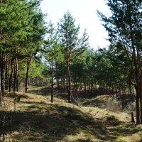 Тропике в лесу :: Александр Подгорный