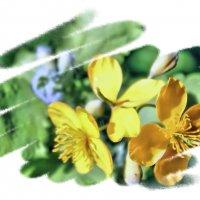 Тепло солнышек лучистых, на зеленых стебельках! :: Валентина ツ ღ✿ღ