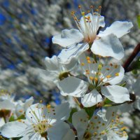 Весна в разгаре :: Рина Воржева