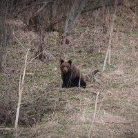 встреча в лесу 2 :: Андрей Соловьёв