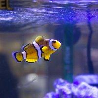 Рыбка :: Sergey Lebedev