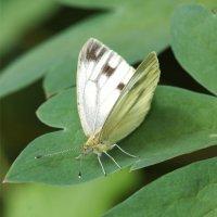 Бабочка :: Наталия Григорьева