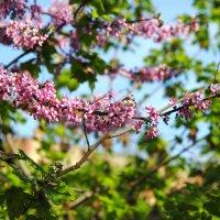 цветы и небо :: Юрий Гайворонский