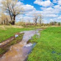 Талая вода :: Любовь Потеряхина