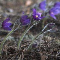 Весна :: Елена