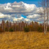 Весна приближается :: Бронислав Богачевский