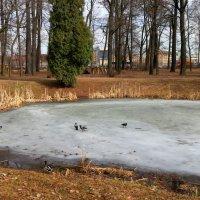 Весна в ботаническом саду. :: Валентина Жукова