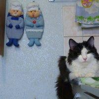 кухонный фанат... :: александр дмитриев