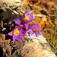 Весенний натюрморт на природе :: Лидия (naum.lidiya)