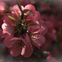 весенние цветы :: Lana Kasiková