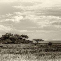 Островок посреди саванны...Танзания! :: Александр Вивчарик