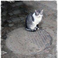 Г К (городская котейка) :: muh5257