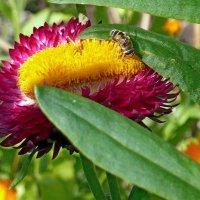 Цветок с пчёлкой :: Вера Щукина