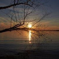 закат сквозь ветви :: Седа Ковтун
