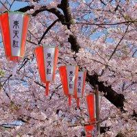 Парк Уэно Токио :: Swetlana V