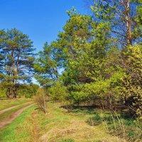 К майским дням торопится дорога... :: Лесо-Вед (Баранов)