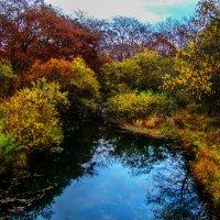 Краски осени яркой... :: Арина