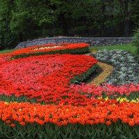 Время тюльпанов :: Андрей Нибылица