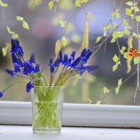 Весна и мускари :: galina tihonova