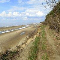 Обвалившаяся дороженька на берегу. :: Мила Бовкун