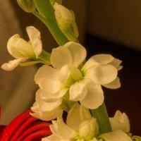цветок :: Lana Kasiková