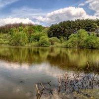 лесное озеро :: юрий иванов