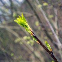 У нас - весна! :: Юрий
