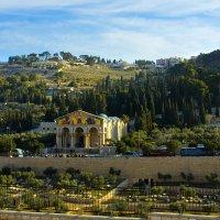 Иерусалим. Вид на Масличную гору и Гефсиманский сад. :: Игорь Герман